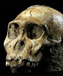 원인~인류 중간존재? … 남아공서 새 화석유골 발견