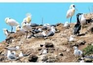 [DMZ·분단 현장을 가다] 155마일 신비의 생태 기행 ② 강화군 비도 저어새