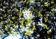 543년을 가꾼 숲, 광릉 국립수목원