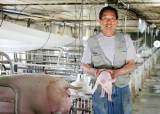 구제역이 지난 자리…돼지 삼겹살값 65% 오르고, <!HS>한우<!HE> 등심값 44% 내렸다