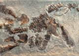새끼 밴 채 죽은 7800만 년 전 공룡