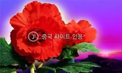 <!HS>김정일<!HE>화 공연하는 北<!HS>여자<!HE>빙상예술인 옷차림이 …