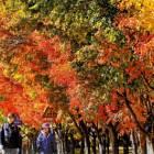 고개 드니, 타는 가을