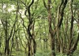 숲은 인류의 미래다 ⑤ 한반도 생태계의 보고 곶자왈