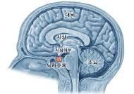 [헬스코치] 인체의 호르몬 생산하는 뇌하수체에 암이?