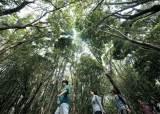 [기자들이 간다 좌충우돌 1박 2일] 거문오름 '아바타의 숲' … <!HS>제주<!HE>도의 재발견