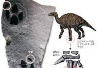 고성 바위에 저 발자국은 … 네발로 걷는 신종 공룡
