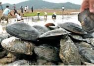 멸종위기 저수지 민물조개 열어보니…충격
