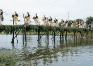 [사진] 소나무·물푸레로 만든 섶다리