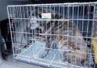 사육장서 도망친 개들 인가 습격 … 울주 시골마을 공포