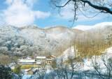 다슬기·반딧불이 서식하는 광덕산, 440년 수령 느티나무 볼만한 안양암