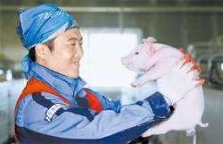 유황 사료로 돼지 길러 '맛있다' 입소문 … 연 매출 12억원