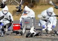 [사진] 혹시 신종 AI … 비둘기 배설물 수거