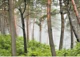 걷기 좋은 힐링 숲길 ④ 서벽리 금강소나무숲