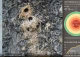 '참나무 에이즈'의 습격 … 서울의 허파 북한산이 떤다