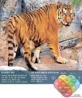 한국호랑이, 세계 타이거 족보 표준 된다