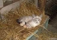 """에디슨 고양이, """"달걀을 품에 꼬옥, 대체 무슨 일이지?"""""""