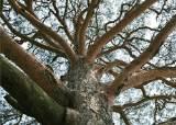 홀로 푸른 고독의 나무, 숲이 우거지면 자랄 수 없으니 …