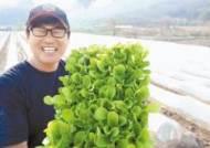봄엔 대만으로 배추 수출, 가을엔 절임배추로 연수익 1억
