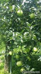 [농·마·드: 농부 마음 드림] (21) 일곱 청년이 생산하는 '장수 사과'