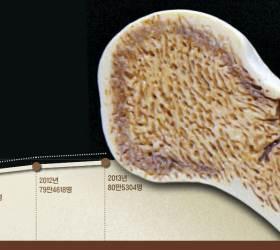 [<!HS>건강한<!HE> <!HS>목요일<!HE>] 남녀노소 칼슘 부족한 한국인