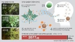 [<!HS>강찬수<!HE>의 <!HS>자연<!HE>, <!HS>그<!HE> <!HS>비밀<!HE>] 돼지풀 알레르기, 서울이 포천보다 50배 독해