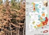 북한산에도 소나무 재선충 … 안면도·울진 금강송도 위협