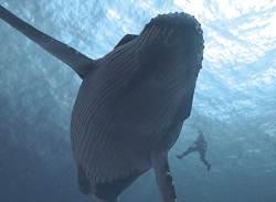 '세상에서 가장 외로운 고래', <!HS>그<!HE> <!HS>비밀<!HE>은 52Hz의 주파수?