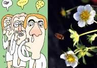 꽃가루 제일 많은 시간 '꽃가루 위험예보'...눈병·뾰루지·트러블 요인? '헉'