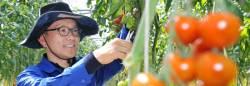 [<!HS>2015<!HE> <!HS>챌린저<!HE> & 체인저] 빨·주·녹·분홍 토마토 … 50억 매출 일군 색다른 농부