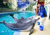 [당신의 역사] 국내 첫 돌고래 쇼, <!HS>동물원<!HE>엔 75만 명이 몰렸다
