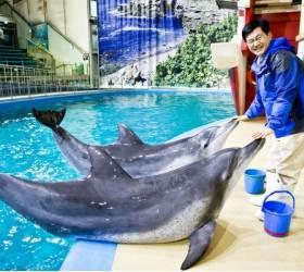 [<!HS>당신의<!HE> <!HS>역사<!HE>] 국내 첫 돌고래 쇼, 동물원엔 75만 명이 몰렸다