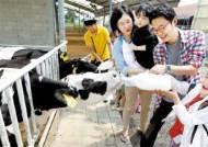 와! 소젖이 나오네, 어! 돼지가 축구하네 … 신나는 농장 체험