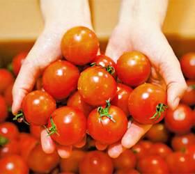 [<!HS>우리농식품사랑캠페인<!HE>] 일교차 큰 고랭지에서 재배 … 당도 높고 탱글탱글 차진 맛
