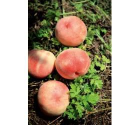 [<!HS>우리농식품사랑캠페인<!HE>] 온 몸 녹아내리는 여름철<!HS>,<!HE> 원기회복…보신탕보다 복숭아 드세요