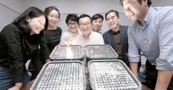 메이저리그 불 밝힌 서강대 … 외국어 검색 개발한 한국외대