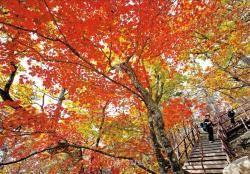 [커버스토리] 알록달록 숲은 변함없어도, 내년 가을엔 좀 낯설지 않을까