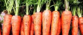 """[<!HS>우리농식품사랑캠페인<!HE>] """"건강에 좋다""""는 말 미안할 정도<!HS>,<!HE> 당근의 효능"""