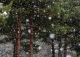 [날씨] 서울 및 수도권 눈 오늘 밤에 그칠 듯