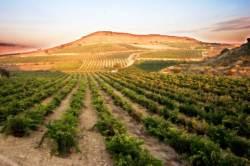 [서한정이 추천하는 이주의 와인] <34> 오래 숙성해 향이 깊은 라몬 빌바오