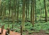 [비즈스토리] 재선충에 쓰러진 나무들, 탐방데크·연료로 새 생명 얻다