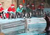 """에버랜드 동물들도 """"메리크리스마스"""""""