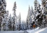 겨울 요세미티의 또다른 재미 '자연설 스키'