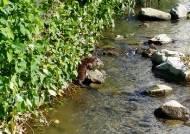수달 14마리 대구신천과 금호강에 서식