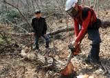 소나무재선충병 비상…세종시, 17개 마을 입산통제
