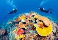 [Travel Gallery] 호주 케언즈가 품은 두 개의 보석
