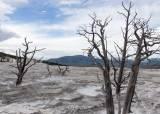 회색곰 800마리 사는 첫 국립공원…피습 실화를 영화화
