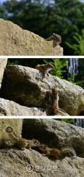 [주기중의 썰로 푸는 사진] 로미오와 줄리엣 다람쥐