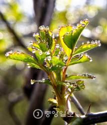 풀잎 이슬, 역광 활용 망원렌즈로 찍으세요