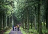 [제주오름기행] 1년에 딱 한 번 열리는 비밀의 숲길, 힐링에 딱이네